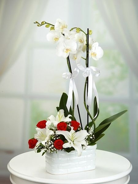 2 li Orkide Güllü Arajman