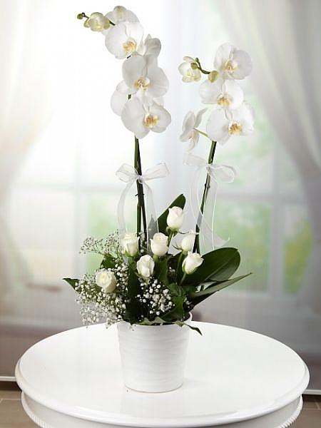 2 li Orkide   Beyaz Güllü Arajman