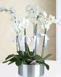 Metal Saksıda 5 Li Orkide